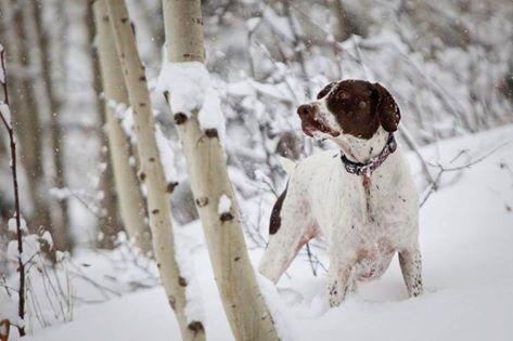 Vos no sos el único al que le gusta la nieve honda… …
